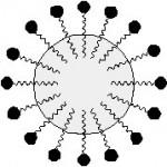 Struttura della micella della caseina